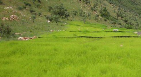 vegetation establishment